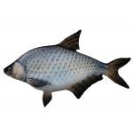 Подушки рыбы